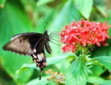 Flutter by at Bannerghatta Butterfly Park - 1