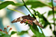 Flutter by at Bannerghatta Butterfly Park - 2