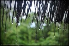 Monsoons here