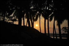 Sunset though the  Coconut trees - Goa