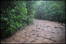 Wildernest 2- Chorla Ghats Goa