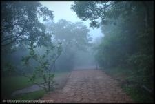 Wildernest 4- Chorla Ghats Goa