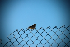 Bird on a fence near the Pangong Lake