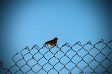 Bird on a fence near the Pangong Lake